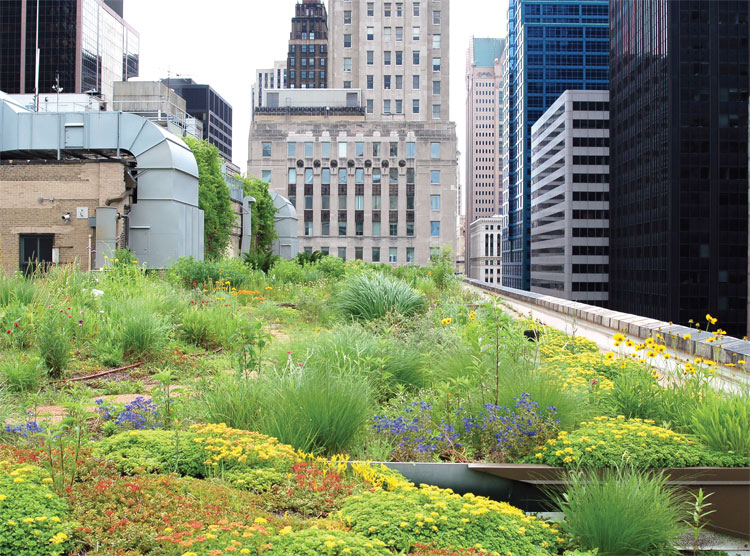 city green roof